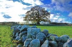 Field of Rocks (CunoCyn) Tags: autumn tree grass wales canon landscape rocks breconbeacons brecon beacons canondslr powys llangattock 60d welshlandscape canon60 canon60d canon1585mm