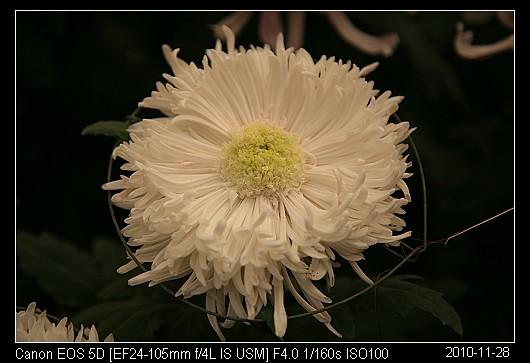 20101128F33藕粉拖掛