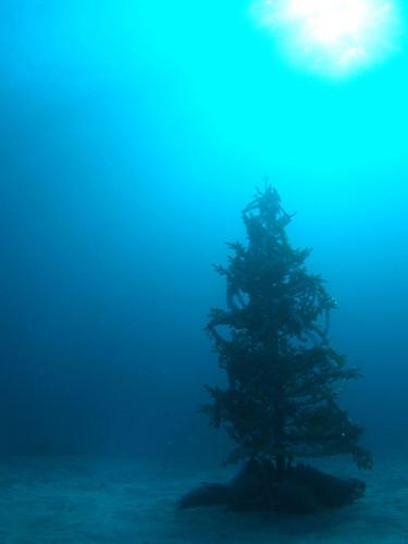 IOPのクリスマスツリー