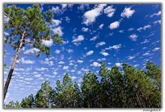 Forest Blue 3 (evangelos K) Tags: blue trees sky leaves forest farm ssm 2470 farmforesttreesleavesskyblue2470ssm