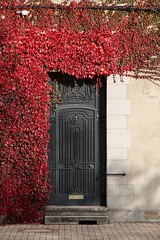 Enter (alfred_couac) Tags: door city red rouge ivy porte ville lierre