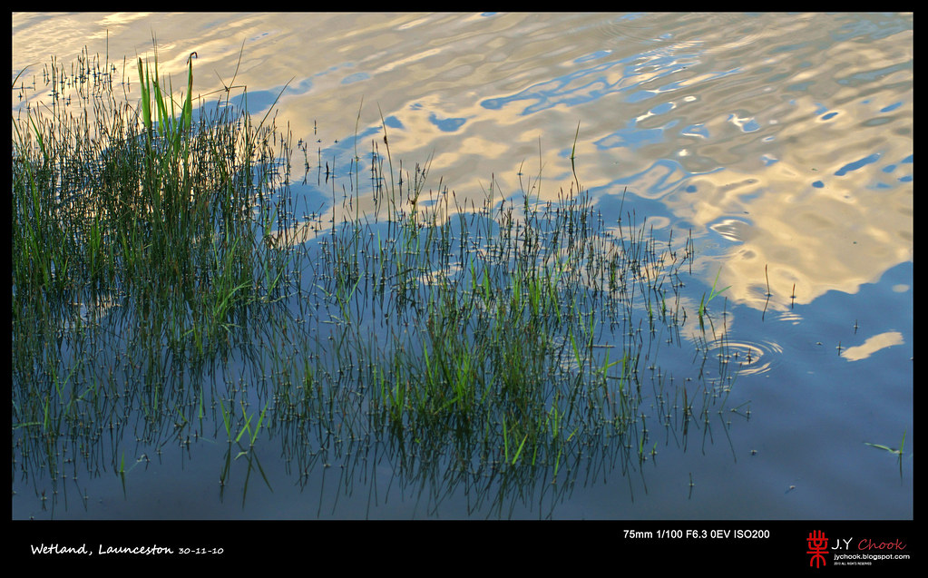 Grasses in the water