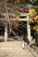 2010 FALL JAPAN KANSAI TRIP (richardstudio) Tags: japan canon kyoto will   day4 kansai   50d