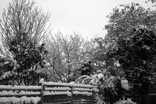 Snow-Nov_10_11
