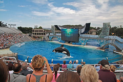 San Diego, Seaworld (Hans van der Boom) Tags: show california people usa america unitedstates sandiego stadium diving tourist american killer whale orca seaworld shamu attraction swimmig