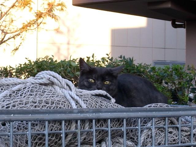 Today's Cat@2010-12-05