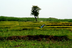 Srirangapatna 091