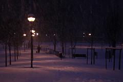 Neige (Valina*Snowflake) Tags: parco snow milan night dark walking milano neve neige luci lampioni sera buio parchetto passeggiare itssnowing nevica nevicare ilneige
