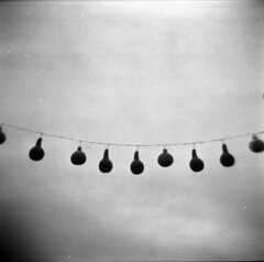 Southerness (evanleavitt) Tags: film gourds analog ga georgia holga south gothic atmosphere southern barbedwire tradition 120mm 120n the