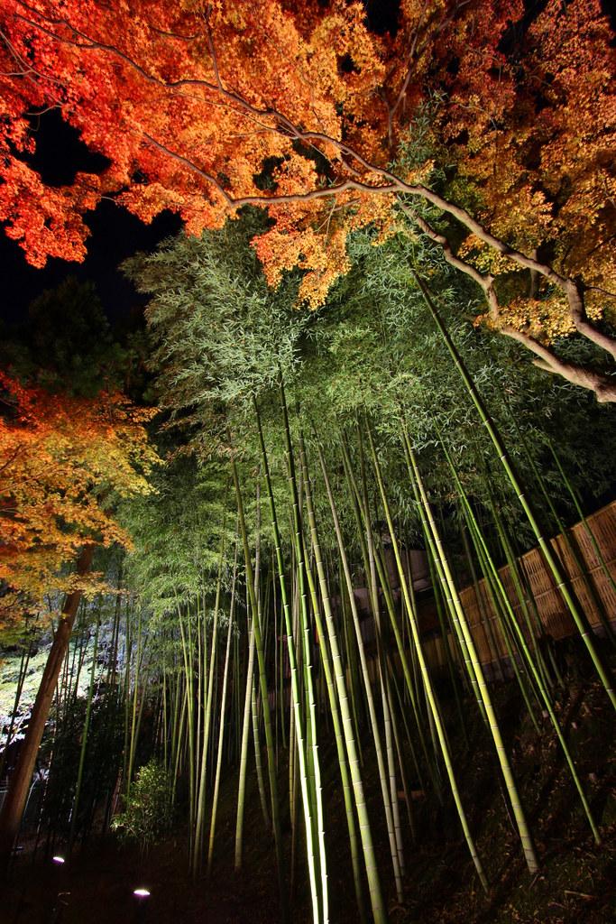 Kitanotenmangu Red Leaf Lightup 2010 (8)