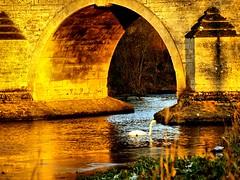 The Golden Milton Ferry Bridge (saxonfenken) Tags: bridge ice river golden swan arch superhero thumbsup nene bigmomma gamewinner dec9th 9986 challengewinner friendlychallenges thechallengefactory yourock1st yourock1stplace herowinner pregamewinner pregamesweepwinner theduelpregamesweepwinnersonly pregameduelwinner 9986bridge