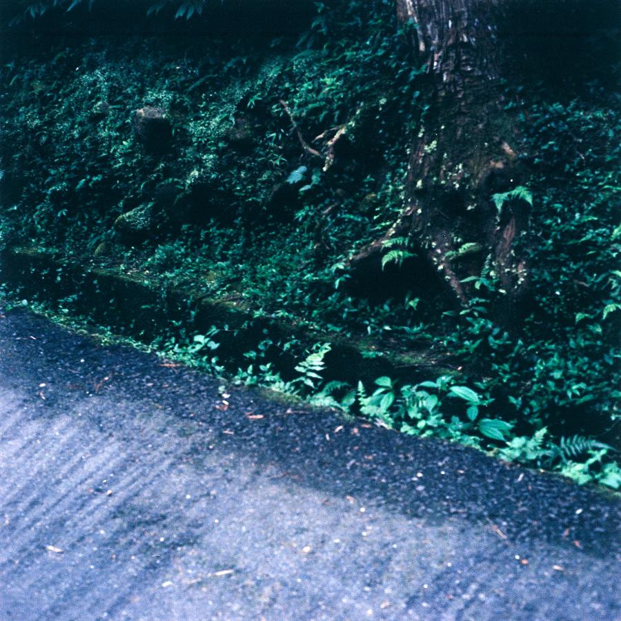 溪頭 綠油油