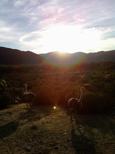 Ostrich Land!