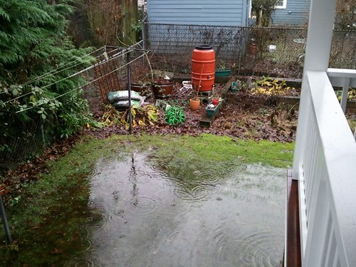 Back yard flooding