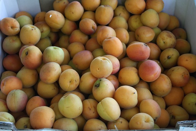 I love apricots