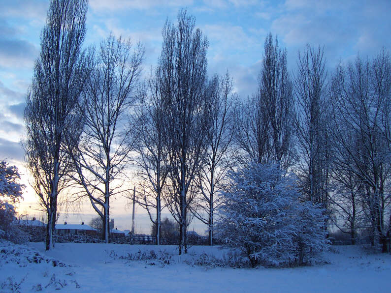 east_yorkshire_trees_in_snow_005