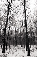 (...storrao...) Tags: trees blackandwhite bw snow berlin germany garden deutschland nikon pb mitte pretoebranco tiergarten week51 d90 project52 storrao sofiatorro nikond90bw