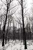 (...storrao...) Tags: trees blackandwhite bw snow berlin germany garden deutschland nikon pb mitte pretoebranco tiergarten week51 d90 project52 storrao sofiatorrão nikond90bw