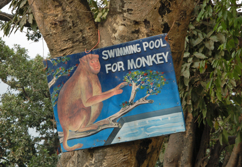 2swimming-pool-for-monkey.jpg