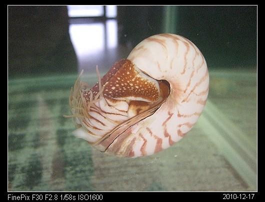 20101217Fun石碇休息站的鸚鵡螺