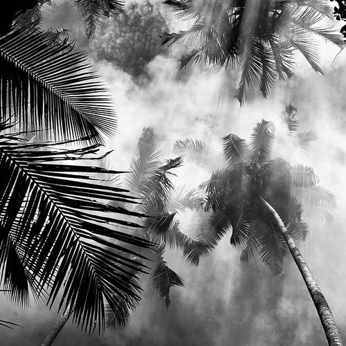 Coco Mist