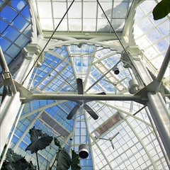 Up The Conservatory (Dominique Guillochon) Tags: sanfrancisco california goldengatepark blue trees light plants usa green art colors lines wall fun shadows unitedstates couleurs curves bluesky vert greenhouse fans colori plantlife plantes californiacoast sanfranciscoconservatoryofflowers ceilingfans ventilateurs greenhousearchitecture