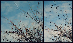 the bird girls go to heaven (thirty2flavors) Tags: bird birds fly diptych heaven birdgirl