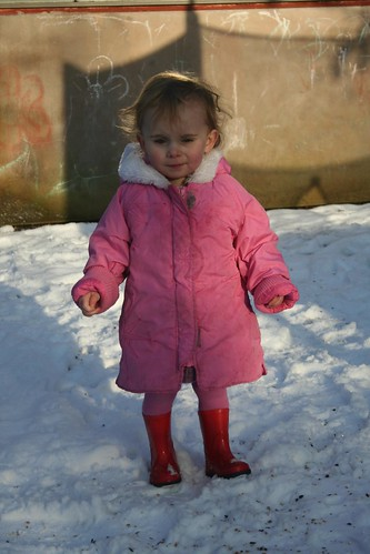 Baya in the snow