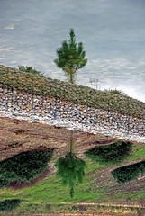 Topsy-turvy (Neil Walker (PT)) Tags: sky lake reflection tree golf lago blink inverted reflexo 18135mm nikond80 quintadoperu oneofmypics mygearandme mygearandmepremium blinkagain