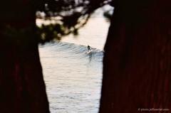 in-between..., santa cruz, november 2010. #004237 (Jeff Merlet Photography) Tags: ocean leica santacruz color tree beach water surf branch pacific kodak surfer wave surfboard 100 135 37 pothole m6ttl indicator westcliff ektar cowells watermarked ncps ektar100 scphoto r0042 elmar135 35c41co thelanetowaddell jeffmerletphotography 004237 jeffmerlet photojeffmerletcom