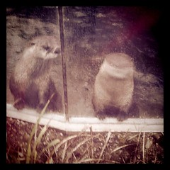 River Otters say hello