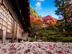 outtakes 2010 #21 (Konpuku-ji temple, Kyoto) (Marser) Tags: japan temple kyoto raw autumnleaves   lightroom grd  grd3 grdigital3