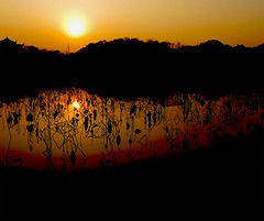 Lotus Sun Lines