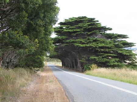 Interesting tree shape
