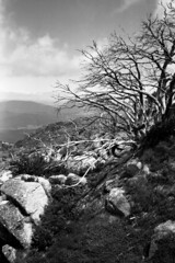mt buffalo, the horn