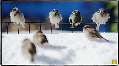 Like a Bird on a Wire (Ryan Brenizer) Tags: nyc newyorkcity birds nikon bokeh centralpark blizzard 135mmf2ddc d3s