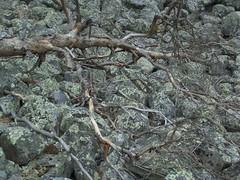 CIMG1575 (AmyFromTheCourt) Tags: arte natura case uccelli finestra fiori piante castello montagna macchina gabbiano alvaraalto renne finlandia babbonatale roccie circolopolareartico