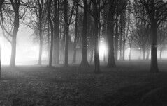 Fog (Peter Rea XIII) Tags: platinumpeaceaward woods fog manchester dark spooky night mono lights greatphotographers flickraward blackandwhite bwworldwithnikon