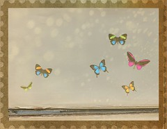 The butterfly counts not months (wonderfunlife) Tags: texture vintage butterflies manipulations oldeffect