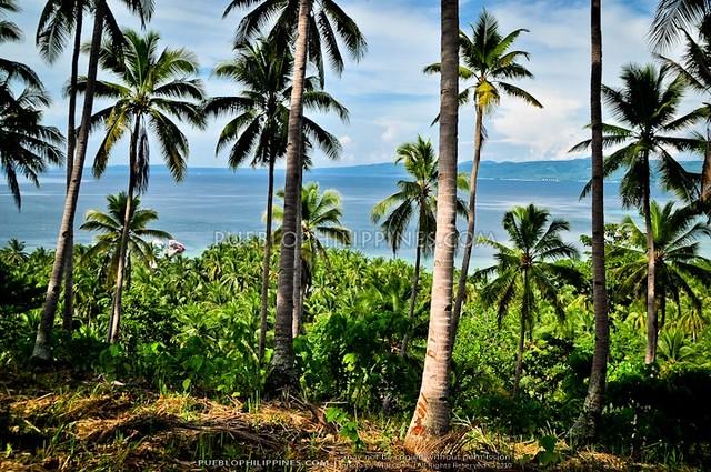 Talikud Island - Samal City 10-10 (640)