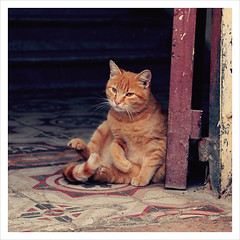 (matina) Tags: street door red colors cat sweet dolce morocco fez marocco 1855mm fes redcat canon500d gattorosso