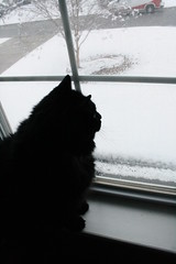 Huggy Bear tries to figure out what this white stuff is