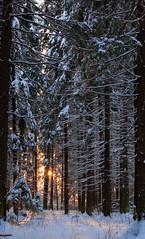 Walk in the snow_19 (Varvara_R) Tags: trees winter snow nature forest soe naturesfinest blueribbonwinner coth supershot bej anawesomeshot nikond90 flickraward theunforgettablepictures photossansfrontieres 100commentgroup ubej platinumpeaceaward coth5 ringexcellence blinkagain dblringexcellence tplringexcellence bestofblinkwinners chariotsofartistslevel1 sunrays5 ginegold