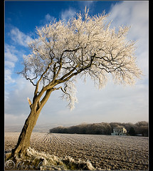 Same but different...... (Chrisconphoto) Tags: trees frost hoarfrost freezing skeletal sthelens crank chrisconway billinge minus8