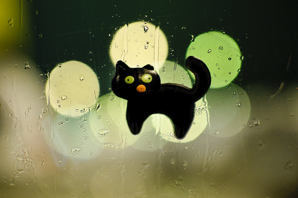 Black Cat on the Window #7/365