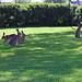 Dansande harar /Dancing rabbits 2