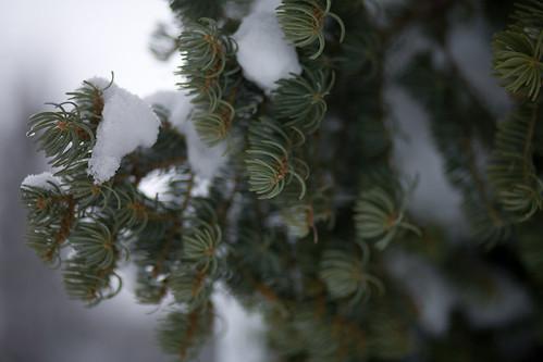 Green + snow