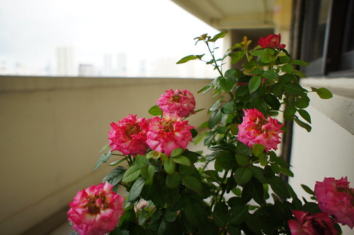 Flowers from Ikea