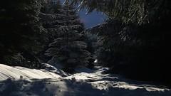 Low down view (stuant63) Tags: sunlight snow ice forest scotland angus glen clova stuant63 redcraig stuartanthony