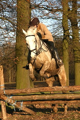 IMG_1193 (equiliber) Tags: horse cheval pferd equestrian hunt foxhunting equus chasse paard jachtclub jacht kruishoutem slipjacht marolle chassecourre crosscountryride equiliber hippisch jachtrit equusjachtclub jachtwandeling equusjachtrit09012011